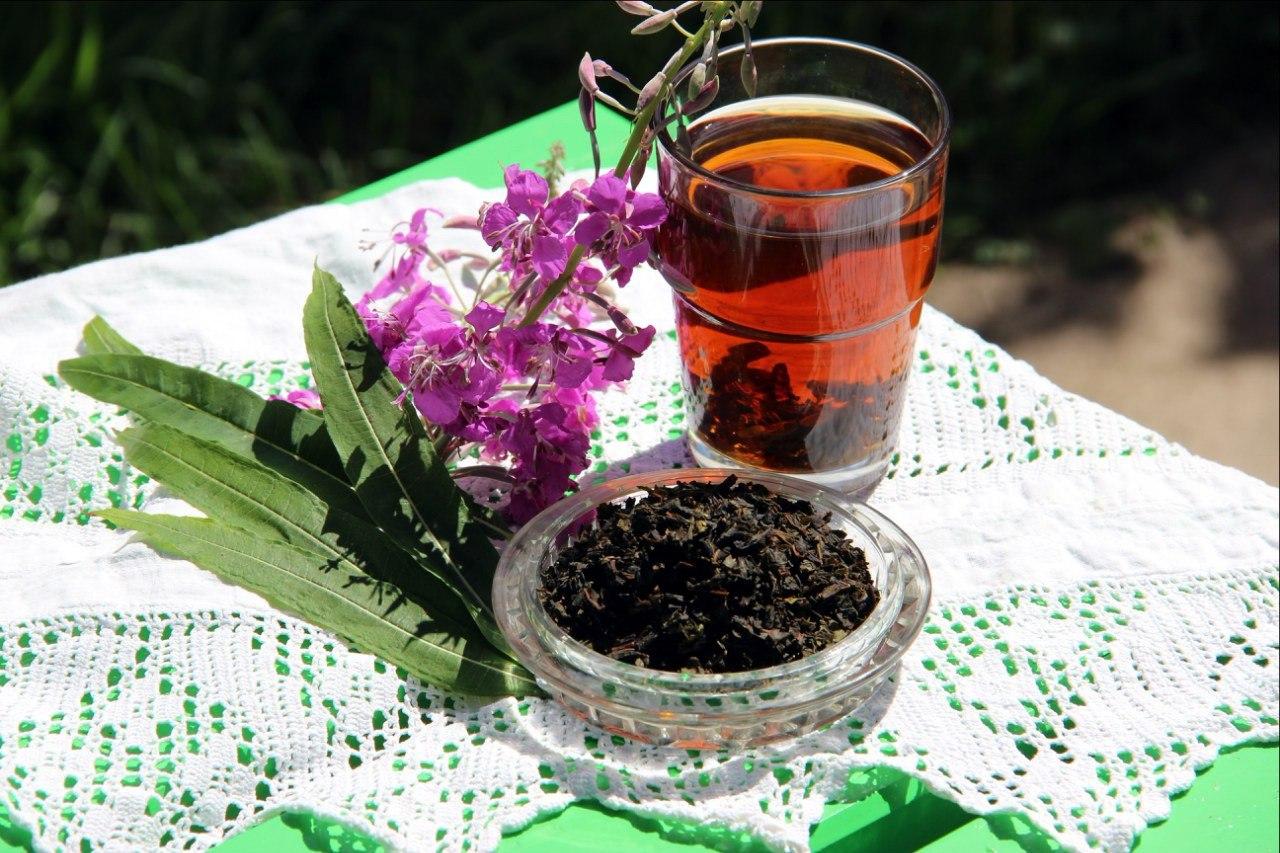 Иван-чай для женского здоровья: показания и противопоказания