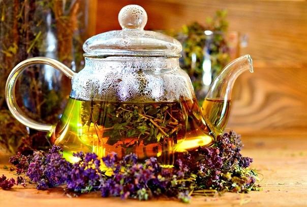 Обладает ли иван-чай мочегонным эффектом, его польза для почек